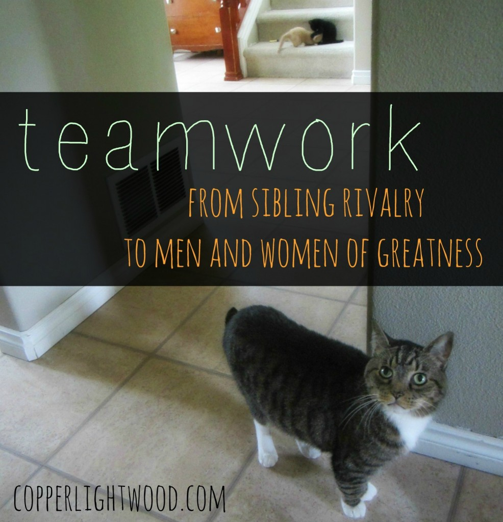 teamwork: from sibling rivalry to men and women of greatness (Copperlight Wood)